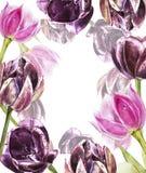 Botanischer freier Raum für Text Aquarelltulpenblumen Vervollkommnen Sie für Einladungs-, Hochzeits- oder Grußkarten Lizenzfreie Stockfotografie