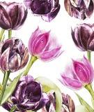 Botanischer freier Raum für Text Aquarelltulpenblumen Vervollkommnen Sie für Einladungs-, Hochzeits- oder Grußkarten Lizenzfreie Stockfotos