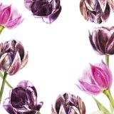 Botanischer freier Raum für Text Aquarelltulpenblumen Vervollkommnen Sie für Einladungs-, Hochzeits- oder Grußkarten Lizenzfreies Stockfoto