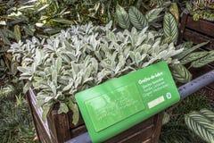 Botanischer Garten Lizenzfreies Stockfoto