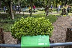 Botanischer Garten Stockbilder