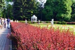 Botanischer Garten, grüne rote Farbe, Leute auf der Straße, ohne Fokus lizenzfreies stockfoto