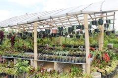 Botanischer Garten Improvides mit Tonnen des tropischen und asiatischen Planes Stockfotos
