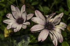 Botanischer Garten Reykjavik lizenzfreie stockbilder