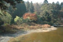 Botanischer Garten Ruqin-Sees-lushan Lizenzfreie Stockfotografie