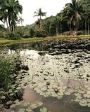 Botanischer Garten Sao-Paulo Lizenzfreies Stockfoto