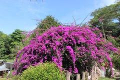 Botanischer Garten Seychellen, Afrika Lizenzfreie Stockbilder
