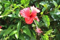 Botanischer Garten Seychellen, Afrika Stockbilder