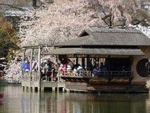 Botanischer Garten-Teil im April 2016 3 31 Brooklyns Lizenzfreie Stockbilder