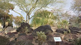 Botanischer Garten von Las Vegas Stockfotos