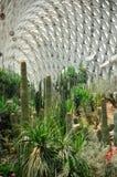 Botanischer Garten Wüsten-Gewächshaus Chenshan lizenzfreie stockfotos