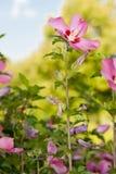 Botanischer Park Lizenzfreie Stockfotos