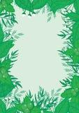 Botanischer Rahmen-Vektor Lizenzfreies Stockfoto