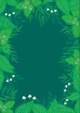 Botanischer Rahmen-Vektor Stockfotografie
