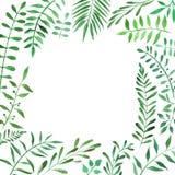 Botanischer tropischer Rahmen des Aquarells stockfoto