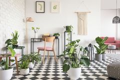 Botanischer Wohnzimmerinnenraum mit kariertem Boden, Stuhl und Schreibtisch, Grafiken und Dekorationen auf der Wand Reales Foto lizenzfreie stockfotos