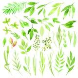 Botanisches clipart Satz grüne Blätter, Kräuter und Niederlassungen Grafische Auslegung-Elemente Vervollkommnen Sie für Heiratsei Lizenzfreies Stockbild