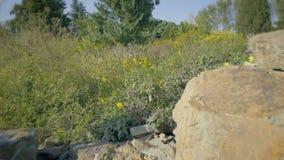 Botanisk bergträdgård på solig dag Blomma-formad blomrabatt med blommor av prärien eller öknen lager videofilmer