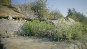 Botanisk bergträdgård på solig dag Blomma-formad blomrabatt med blommor av prärien eller öknen stock video