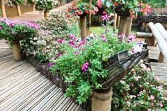botanisk blommaträdgård royaltyfria bilder