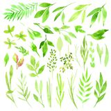 Botanisk clipart Uppsättning av gräsplansidor, örter och filialer blom- designelement Göra perfekt för att gifta sig inbjudningar Royaltyfri Bild