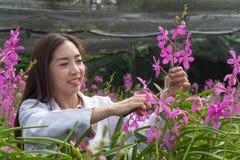 Botanisk forskningorkidé för lycklig forskare som bär ett vitt lock och klipper orkidéblomman för att forska i orkidéträdg arkivfoto