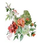 Botanisk illustration Royaltyfri Bild