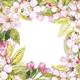 Botanisk illustration för Apple ram Kortdesign med det äppleblommor och bladet Isolerad botanisk illustration för vattenfärg Royaltyfri Foto