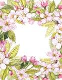 Botanisk illustration för Apple ram Kortdesign med det äppleblommor och bladet Isolerad botanisk illustration för vattenfärg Arkivfoto