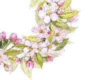 Botanisk illustration för Apple ram Kortdesign med det äppleblommor och bladet Isolerad botanisk illustration för vattenfärg Royaltyfri Fotografi