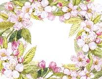 Botanisk illustration för Apple ram Kortdesign med det äppleblommor och bladet Isolerad botanisk illustration för vattenfärg Arkivbilder
