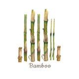 Botanisk illustration för vattenfärg av bambustammar som isoleras på vit bakgrund med text royaltyfri illustrationer