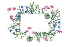 Botanisk illustration för vattenfärg av hälsningkortet vektor illustrationer