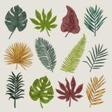 Botanisk illustration låter vara tropiskt Arkivbild
