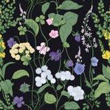 Botanisk sömlös modell med att blomma lösa blommor och ängblomningväxter på svart bakgrund Blom- bakgrund stock illustrationer