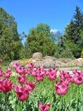 botanisk trädgård Royaltyfria Foton