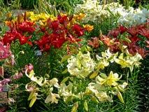botanisk trädgård Royaltyfria Bilder