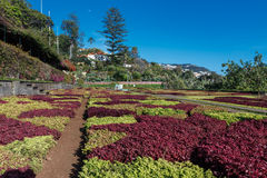 botanisk trädgård Arkivfoto