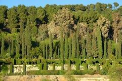 botanisk trädgård Royaltyfri Foto