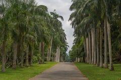 Botanisk trädgård av Peradeniya Arkivbild