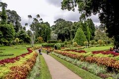 Botanisk trädgård av Peradeniya, Kandy Arkivfoton