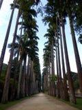 Botanisk trädgård av Rio de Janeiro arkivfoto