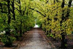 Botanisk trädgård Coimbra Arkivfoton