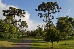 Botanisk trädgård Curitiba, Brasilien Arkivbilder