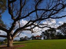 botanisk trädgård görar till kung parken royaltyfri bild