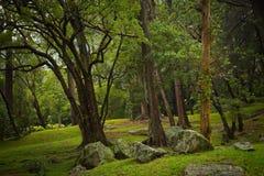 Botanisk trädgård Hakgala Arkivfoton