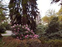 Botanisk trädgård i awice för ArboretumWojsÅ ' royaltyfri foto