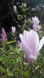 Botanisk trädgård i Birmingham Royaltyfri Fotografi