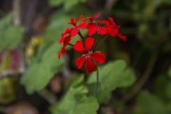 Botanisk trädgård i Lyon Exotiska blommor i botaniska trädgården Royaltyfria Bilder