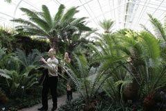 Botanisk trädgård i Munich Arkivbilder